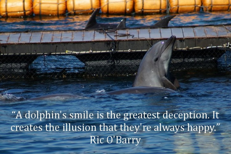 dolphin-smile