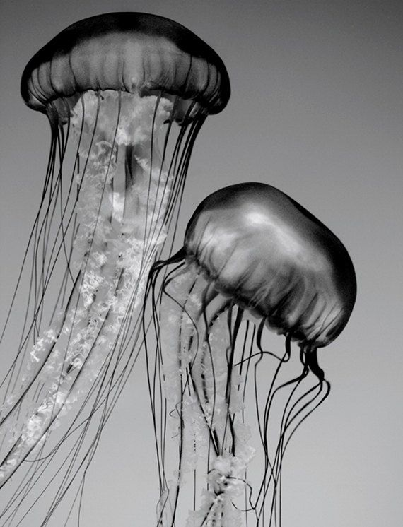 b92f4f5081b822022120346b74cdcae4_jellyfish-art-black-and-white-black-and-white-nature-art_570-746