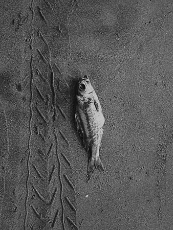 OTC_winter2013_Yaseen-Anwer-Lonely-Fish